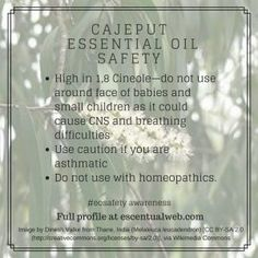 Have you heard about cajeput oil? Learn more with this essential oil profile, including safety tips. Essential Oil Safety, Are Essential Oils Safe, Essential Oil Diffuser, Melaleuca, Safety Tips, Aromatherapy, Diffusers, Learning, Profile