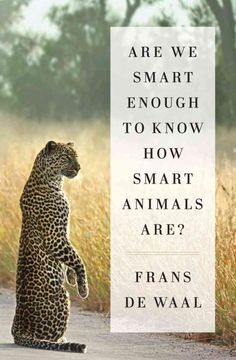 """""""Are We Smart Enough To Know How Smart Animals Are?"""" by Fran de Waal ... A groundbreaking work on animal intelligence explores the intricate and complex nature of the animal mind, discussing how the study of animal cognition has revealed how humans have underestimated animals' intellectual abilities.  Find this book here @ your Library http://hpl.iii.com/record=b1264191~S1"""