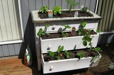 Grow It In Garbage! Repurposing Waste To Build Your Garden    Six great ways to get something from (nearly) nothing!