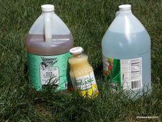 DIY weed killer 1/2 gal vinegar, 1/2 bottle lemon juice, 1/2 cup castille soap (find at Target)  Add Salt for extra strength- effective -safe for you & safe for the environment