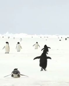 Animals 🙈 - Animals, animals wild, animals funny, animals cutest, animals and pets All Gods Creatures, Cute Creatures, Beautiful Creatures, Animals Beautiful, Cute Funny Animals, Cute Baby Animals, Animals And Pets, Penguin Walk, Penguin Love