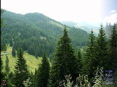 ERDÉLYORSZÁGBAN VAN AZ ÉN HAZÁM - FARKAS ANDRÁS - MIHI Van, Mountains, Nature, Travel, Naturaleza, Viajes, Destinations, Traveling, Trips