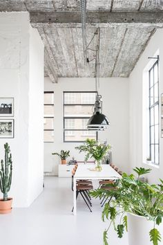 A white walled industrial space with lots of plants, big windows with black frames and black industrial pendants hanging from the ceiling