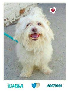 RESCUED LOOKING GLASS RESCUE  Available @NYCDOGS.URGENTPODR.ORG