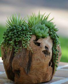 déco bois flotté et plantes succulentes - pot à fleur artisanal à mettre sur la terrasse extérieure