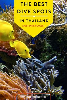 Where is the best scuba diving in Thailand? After diving all over Thailand we decided to put together a list of the best dive sites along with the. Thailand Honeymoon, Thailand Travel Tips, Asia Travel, Travel Abroad, Scuba Diving Thailand, Best Scuba Diving, Ubud, Travel Around The World, Around The Worlds