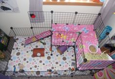 Isabella and Rose Petal's New Cage (Top View) - Guinea Pig Cage Photos