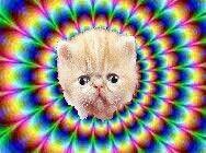 Its a cattttttt