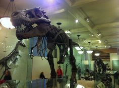 You Won't Find Alex the Lion at Central Park Zoo, But You Will Find the T-Rex at the American Museum of Natural History in New York