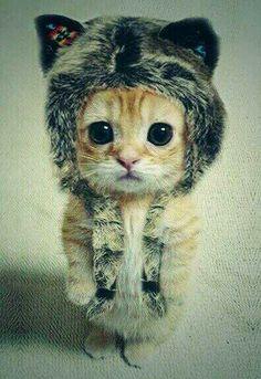 Cute :$