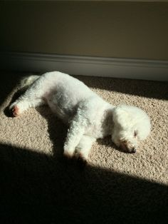 Sun bathing. She does this every day.