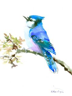 Blue Jay 12 X 9 original watercolor painting by ORIGINALONLY