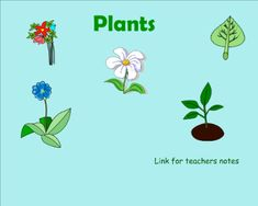 Plants - Explore plants by labeling, life cycle activities and reding comprehension. Veyr interactive for students of multiple learning styles.  Resource type: SMART Notebook lesson  Subject: Science,  Cross-curricular,  English Language Arts,  Special Education  Grade: Pre-Kindergarten,  Kindergarten,  Grade 1,  Grade 2,  Grade 3