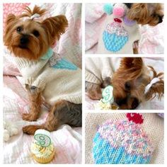 Several small dog Sweaters to knit on this page. I've made most of them and they always turn out really nice.