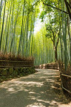 Bosque de bambú Kyoto, Japan