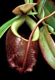 amazing plants and flowers | amazing carnivorous plant photography
