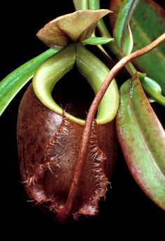 amazing plants and flowers | amazing carnivorous plant photography
