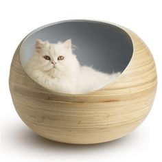 Cool Cat Trees, Cool Cats, Cat Tree Plans, Kitten Beds, Cat Shelves, Cat Cave, Cat Room, Pet Furniture, Cat Accessories