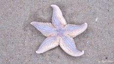 This beautiful starfish reminded me of dancing the twist....... dance…