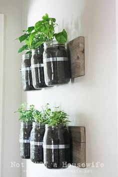 Brilliant! (And pretty): using mason jars as wall garden planters.  #garden #diyMight be pretty on an outside wall as wellI'm sure it will be. :)I'm thinking it's a good way to always have fresh herbs inside your kitchen. :)How does the water drain?I would think it's either you carefully drill holes at the bottom or you water sparingly. Condensation should help.