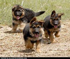 """aplacetolovedogs: izismile Run cute fluffy puppies run!! Original Article """