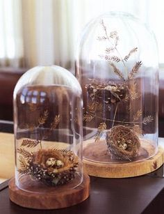 Specimen displays