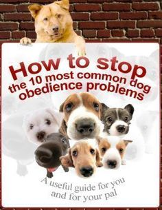 How to stop the 10 most common dog obedience problems #DogObedienceTipsandAdvice #dogobidience #DogSupply