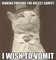 Jenkins prepare the nicest carpet.  I wish to vomit.