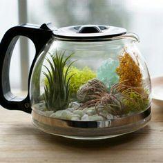 Cafetière plantes
