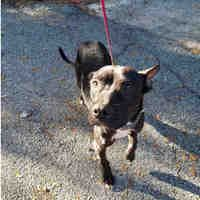 Available Pets At Alachua County Animal Services In Gainesville