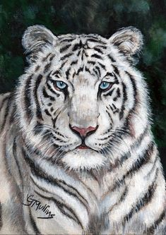 White Tiger Cat Painting Art Original 5 x 7 Colored Pencil Art Colored Pencil Artwork, Color Pencil Art, Colored Pencils, Big Tiger, Tiger Art, Rare Animals, Animals And Pets, Exotic Animals, I Love Cats