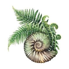 natur illustration Watercolor prehistoric seashell with the fern branches growing out from it. Hand painted natural illustration isolated on white background Art Aquarelle, Watercolor Art, Botanical Illustration, Botanical Prints, Mutter Erde Tattoo, Nautilus Tattoo, Detailliertes Tattoo, Snail Tattoo, Natur Tattoos