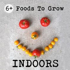 6+ food you can grow indoors all year round