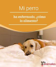 Mi perro ha enfermado, ¿cómo lo alimento?  Mi perro ha enfermado. Él no puede decir lo que le ocurre, tenemos que ser sus dueños los que estemos pendientes e interpretar su comportamiento. #enfermo #perro #alimento #salud