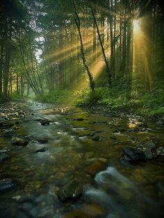 SEASONAL – SUMMER – sun rays peak through the forest that surrounds the rocky river in oregon, photo via secrets. Beautiful World, Beautiful Places, Beautiful Forest, Landscape Photography, Nature Photography, Photography Flowers, Rocky River, Amazing Nature, Belle Photo