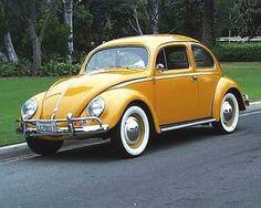 1954 Beetle