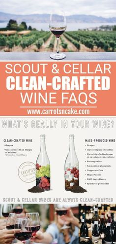 If you're new to clean-crafted wine, you might have some questions about why Scout & Cellar wines are different from others on the market. I personally think they are delicious, which but I really love that they are better for you Gluten Free Wine, Wine Source, Grapes And Cheese, Wildly Delicious, Carrots N Cake, Cake Blog, Take Care Of Your Body, 200 Calories, Wine Time