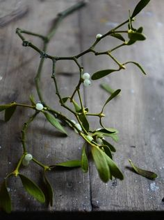 Although mistletoe's reputation as the sprout of love may seem like a thing of the present, it actually takes root in ancient times. The plant's knack for staying lush and fruitful throughout the year led the ancients to use it as a symbol of fertility, and the Greek goddess Artemis wore a crown of mistletoe as an emblem of immortality.