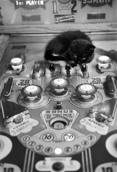 fewthistle:  Pinball Wizard. Kitten on a Pinball Machine. 1959. Photographer: Edouard Boubat