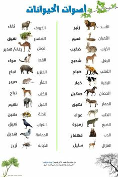 Arabic Alphabet Letters, Learn Arabic Alphabet, Learn Arabic Online, Vie Motivation, Islam Beliefs, Islam Religion, Arabic Lessons, English Language Learning, Beautiful Arabic Words