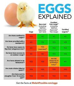 Eggs, explained