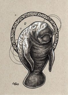 Manatee original ink and white pencil drawing by Bryan Collins by bryancollins on Etsy