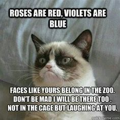 14 Hilarious Grumpy Cat Memes That Will Make You Smile - Funny Cat Quotes Grumpy Cat Quotes, Funny Grumpy Cat Memes, Funny Relatable Memes, Funny Cats, Funny Jokes, Grumpy Kitty, It's Funny, Hilarious Animal Memes, Funny Dog Fails