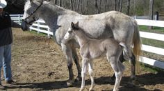 Mare and her colt Farm Life, Kentucky, Bugs, Horses, Animals, Animales, Animaux, Beetles, Animal