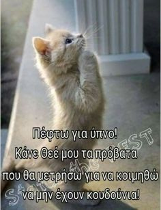 My Children Quotes, Quotes For Kids, Greek Beauty, Funny Greek, Beautiful Pink Roses, Good Night Image, Greek Quotes, Kittens Cutest, Sweet Dreams