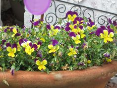 Just some pansies