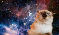 Kedi Forumlarında Karşılaştığımız Beyin Yakan Sorular 2