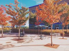 Fall at Purchase College. Credit: Thomas DiCostanza