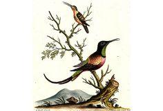 Red and Little Brown Hummingbirds on OneKingsLane.com