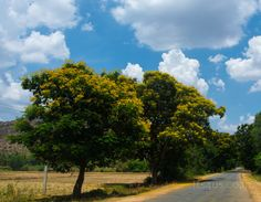 Driving home on a scenic road: Bangalore to Coimbatore - Its4US